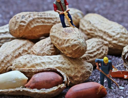 Ettevõtja tasu vs töötaja tasu – vabadus vs seadusejärgsed õigused?